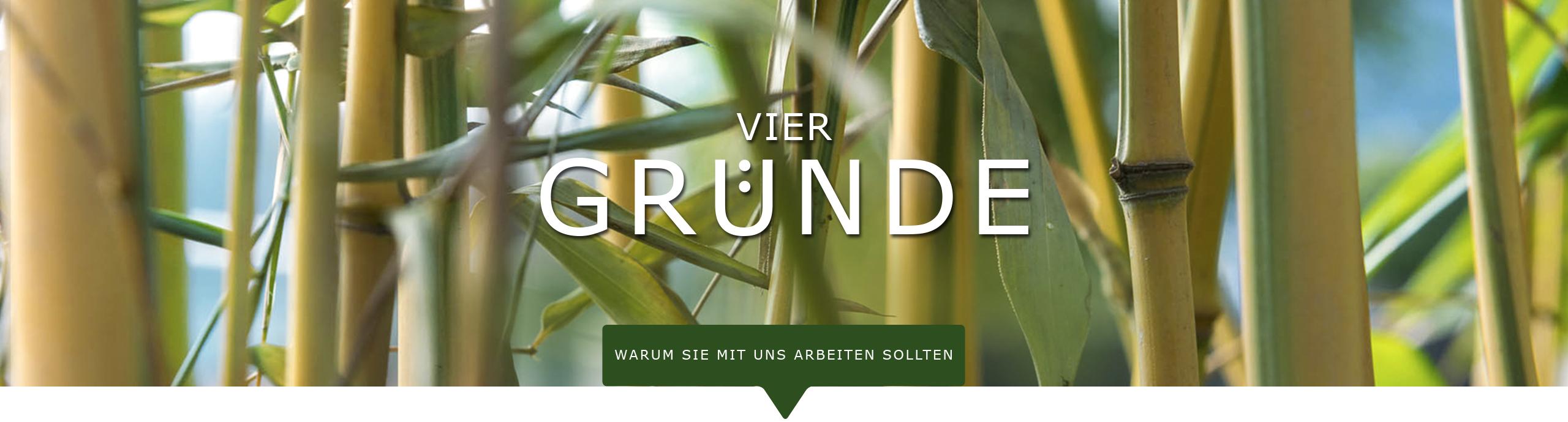 Innengrün Gärtnerei Gärtner Hamburg